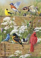 Buffalo-Games Hautman Songbird Menagerie 300pcs Jigsaw Puzzle 0-599 Piece #2496