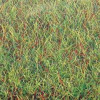 Busch Spring 40 x 32 Model Railroad Grass Mat #7221