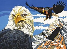 Colart Soaring Eagles Acrylic Paint by Number 11.5x15.5 Paint By Number Kit #11016