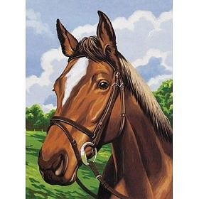 Colart Horse Head Acrylic Paint by Number 9''x12'' -- Paint By Number Kit -- #12010