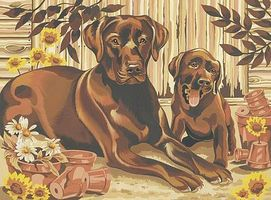 Colart Resting Labrador (Dogs) Acrylic Paint by Number 11.5x15.5