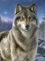 Colart Night Watch/Wolf Acrylic Paint by Number 9x12 Paint By Number Kit #78023