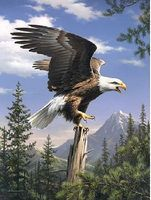 Colart Screaming Bald Eagle Acrylic Paint by Number 9x12 Paint By Number Kit #78025