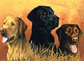 Colart Labrador Dogs in Marsh Acrylic Paint by Number 12x16 Paint By Number Kit #78029