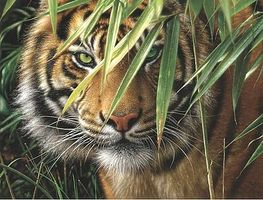 Colart Emerald Forest/ Tigers Face Acrylic Paint by Number 12x16 Paint By Number Kit #85010