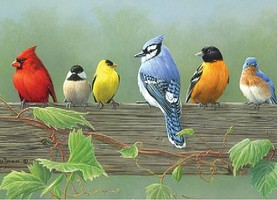 Colart Rail Birds Acrylic Paint by Number 12x16 (Replaces #78032)