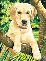 Colart Labrador Puppy Acrylic Paint by Number 9x12 (Replaces #91210)