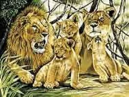 Colart Pride of Lions Acrylic Paint by Number 11.5x15.5 Paint By Number Kit #91589