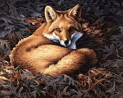 Dimensions Sunlit Fox Paint By Number Kit #91380