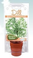 Dunecraft Dill Mini Herb Garden Kit