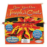 Dunecraft Grow Your Own Josephs Coat