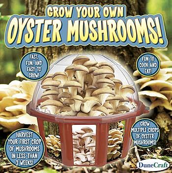 Dunecraft Grow Your Own Oyster Mushrooms