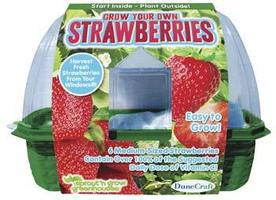 Dunecraft Grow Your Own Strawberries Kit