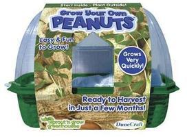 Dunecraft Grow Your Own Peanuts Kit