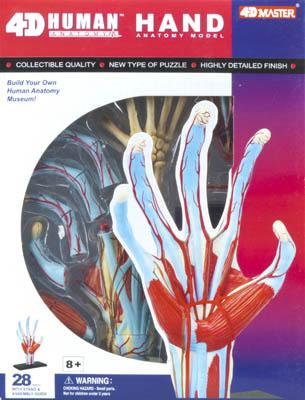 4D Vision Models Visible Hand Anatomy Kit