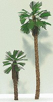 Grand-Central Fan Palm Trees Small  3/ (3)