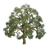 JTT Live Oak N Scale Model Railroad Tree #94348