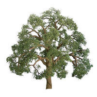 JTT Live Oak 3/4 inch (6 pack) Z Scale Model Railroad Tree #94403
