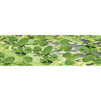 JTT Lily Pads HO Scale Model Railroad Scenery Plant #95537