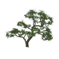 JTT Beech Tree O Scale Model Railroad Tree #96060