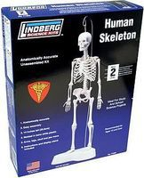 Lindberg 14 Tall Human Skeleton