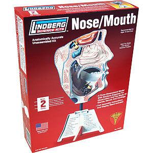 Lindberg HUMAN NOSE/MOUTH