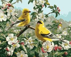 Plaid Goldfinches (16x20) Paint By Number Kit #21680