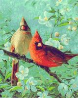Plaid Cardinals & Cherry (16x20) Paint By Number Kit #21737