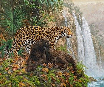 Plaid Paint By Numbers El Dorado (Leopards/Jungle) (20''x16'') -- Paint By Number Kit -- #21756