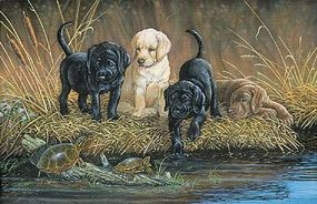 Plaid Turtle Hunters (Labrador Puppies at Stream) (20x16) Paint By Number Kit #22027