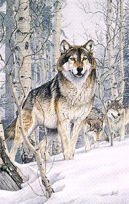 Plaid Paint By Numbers Second Glance (Wolves Snow Scene) (16''x20'') -- Paint By Number Kit -- #22029