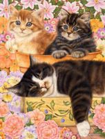 Plaid Quiet Garden Afternoon (Kittens & Flowers)(16x20) Paint By Number Kit #22046