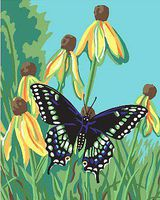 Plaid Butterfly (8x10) Beginner Paint By Number Kit #22051