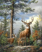 Plaid Standing Proud (Deer/Forest Scene)(20x16) Paint By Number Kit #22083