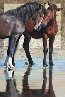 Plaid Reflections (Two Horses) Paint by Number (16x20)