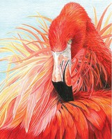 Flamingo (8.75''x11.75'') Pencil By Number Kit #37366
