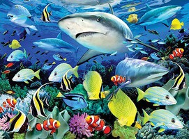 Royal-Brush Reef Sharks Paint by Number Age 8+ (11.25''x15.375'')