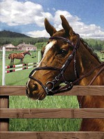 Equine Paddock (Horses)(8.75''x11.75'') Paint By Number Kit #37394