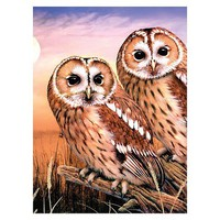 Royal-Brush Tawny Owls Paint by Number Age 8+ (8.75''x11.75'')