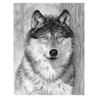 Royal-Brush Alpha (Wolf Face) Sketching Made Easy Age 8+ (11.25''x15.375'')