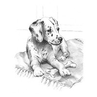 Royal-Brush Dalmatian Pup Sketching Made Easy Age 8+ (11.25''x15.375'')