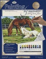 Royal-Brush PBN Canvas Horses 11X14 Paint By Number Kit #pcl2