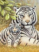 Royal-Brush JR PBN White Tiger Pair Paint By Number Kit #pjs76