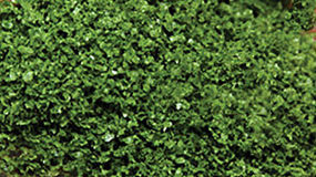 Scenic-Expr SuperLeaf Shaker medium green Model Railroad Ground Cover #6132