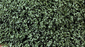 Scenic-Expr SuperLeaf Scale Model Leaf Flake 16oz Shaker - Olive Green Model Railroad Ground Cover #6152