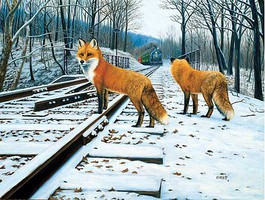 Train-Enthusiast Fox Tracks 500pc