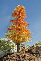 Timberline Harvest Dawn Deciduous Tree 3'' to 5'' Model Railroad Tree #217