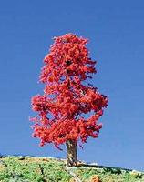 Timberline Indian Summer Deciduous Tree 6'' to 9'' Model Railroad Tree #224