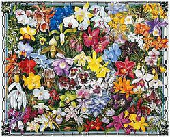 WhiteMount Orchids (Flowers) Collage Puzzle (1000pc)