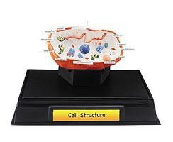 Woodland Cell Structure Clssrm Pk